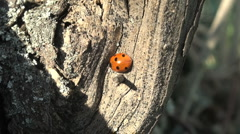 Ladybird on a grass. Stock Footage