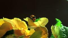 Ladybird on a grass. - stock footage