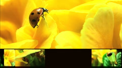 Montage with ladybug Stock Footage