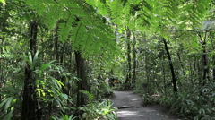 Dominica rainforest path Stock Footage