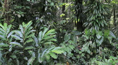 Dominica rainforest with many leaves Stock Footage