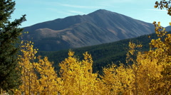 Scenic trees mountains fall colors Colorado - stock footage