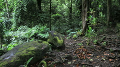 Mossy rocks in a forest in Moorea Stock Footage