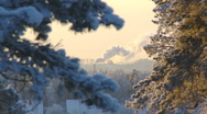3 clips of Frozen plants 5/5 Stock Footage