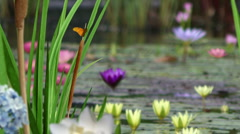 Stylish Nature Scenes Stock Footage