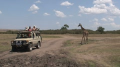 Stock Video Footage of Giraffe safari