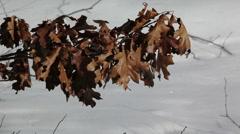Brown Leaves in winter wind Stock Footage