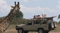 Giraffe in front of safari car Stock Footage