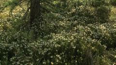 White Mountain Heather 02 - stock footage