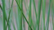 Pond Grass Stock Footage