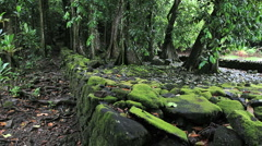 Marae wall with mossy stones .MOV  Stock Footage