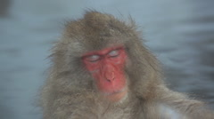 Relaxing Japanese Macaques monkey, Jigokudani reserve, Chubu, Japan, Asia  Stock Footage