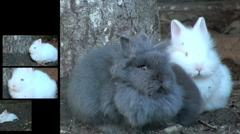 Montage with rabbit, close-up Stock Footage