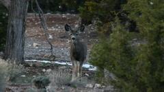 Deer Talk Stock Footage