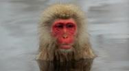Lone Japanese Macaques monkeys, Jigokudani nature reserve, Chubu, Japan, Asia  Stock Footage