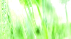 Green background Wheat Crops Bread Flour Bakery agriculture Stock Footage