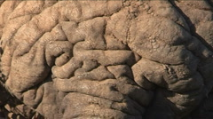 Elephants skin Stock Footage