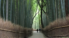 Large Bamboo Forest, Kyoto, Japan, Asia Stock Footage