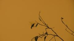 Hummingbird - stock footage