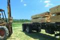 Forklift Unloading Construction Lumber 02 Footage