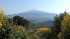 Sicily Etna and yellow flowers  Stock Footage