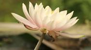Big flower Stock Footage