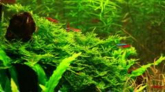 Aquarium design. Natural Aquarium. Video - 4 Stock Footage