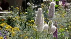 Beautiful Spring Garden HD - stock footage