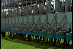 Horses leaving gate at horse race Stock Footage