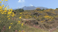 Sicily Etna lava field and flowers Stock Footage