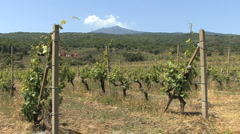 Sicily vineyard and Etna volcano Stock Footage