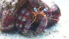 Hermit crab spider walking on sand underwater Stock Footage