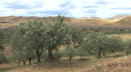 Sicily landscape with olive trees Stock Footage