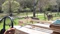 Safari Tour Guide 5990 HD Footage