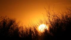 Bush Sunset - stock footage