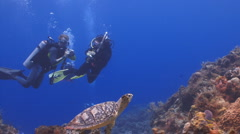 Turtle and divers taking pictures Stock Footage
