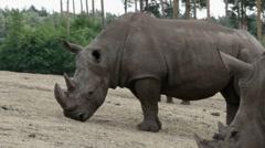 Rhinos 8600N 1/2 Stock Footage