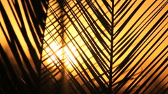 Palm Frond Color Close Up Stock Footage