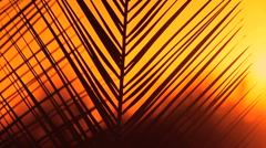 Palm Frond Sunset Stock Footage