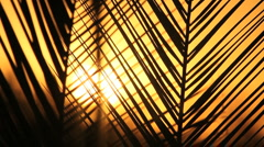 Palm Frond Sunset Slowed Stock Footage