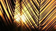 Stock Video Footage of Palm Frond Sunset Slowed