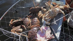 Crab Catch Stock Footage