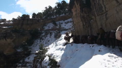 Grand Canyon Mule Train Snow Stock Footage