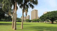 Honolulu park with palm trees Stock Footage