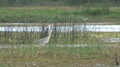 Stock Video Footage of Bird at Mimeriya National Park