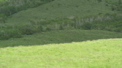 Grassy Meadow 48 Stock Footage