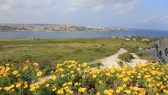 Beautiful scene of ocean, the city and hillside with yellow flowers(HD)c Stock Footage