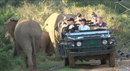 Stock Video Footage of Elephants safari South Africa