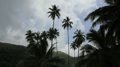 Coconut palms and birds Stock Footage