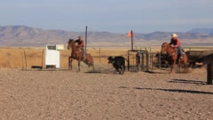 Cowboys Calf Roping (HD) co Stock Footage